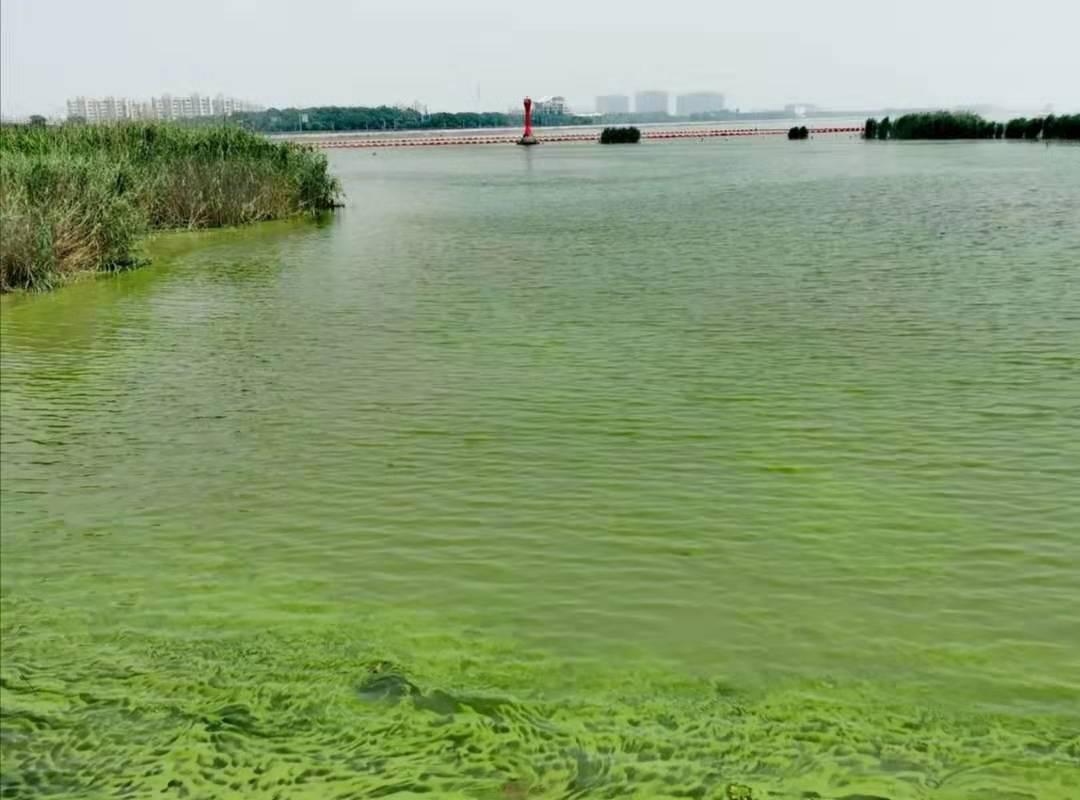 蓝绿藻传感器在治理藻类污染方面的应用